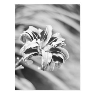 Elegant Black and White Flower Photography Postcard