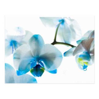 Elegant Blue Orchids Custom Postcard