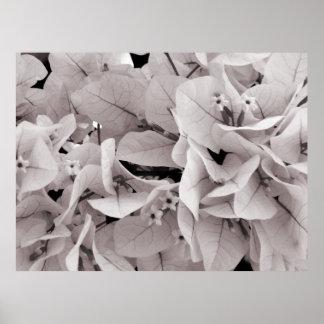 Elegant bougainvillea vintage style floral pattern poster