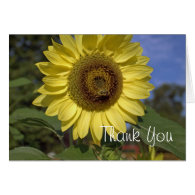 Elegant, bright summer yellow sunflower thank you greeting cards