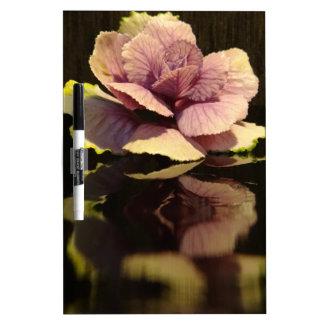 Elegant Cabbage Plant on Black Background Dry Erase Board