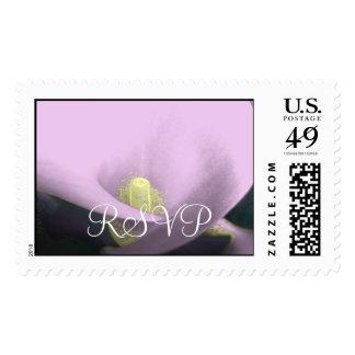 Elegant Cala Lilly - Purple Postage