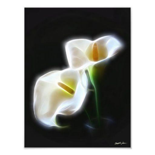 Elegant Calla Lily Flowers 13 Modern Print Photo Print