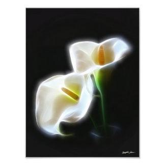 Elegant Calla Lily Flowers 13 Modern Print Photograph