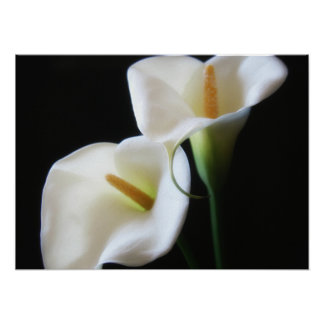 Elegant Calla Lily Flowers 13 Poster
