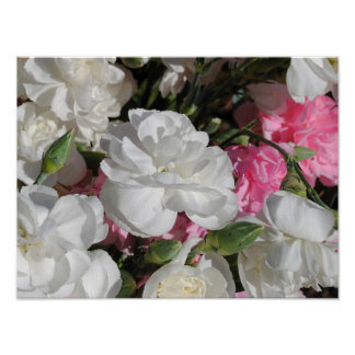 Elegant Carnation Floral Poster
