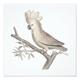 Elegant Cockatoo Antique Engraving Card