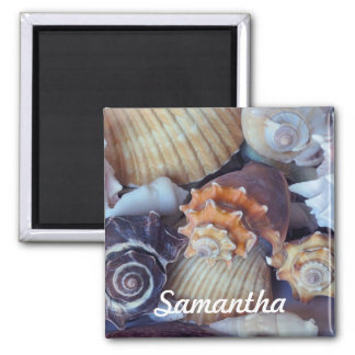 Elegant Companions Seashell Medley 2 Inch Square Magnet