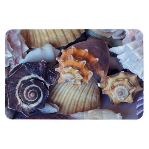 Elegant Companions Seashell Medley Magnet