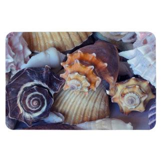 Elegant Companions Seashell Medley Rectangular Photo Magnet
