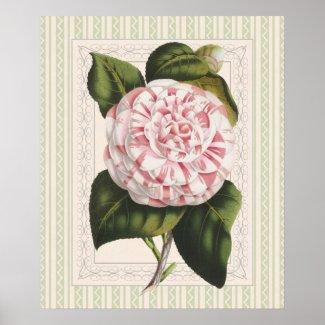 Elegant Conservatory Gardener's Botanical Camellia