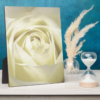 Elegant Cream Rose Plaques