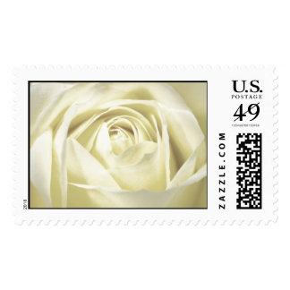Elegant Cream Rose Postage