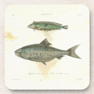 Elegant design, lithography fish beverage coaster
