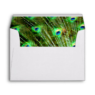 Elegant Dramatic Peacock Plumage Pattern Envelope
