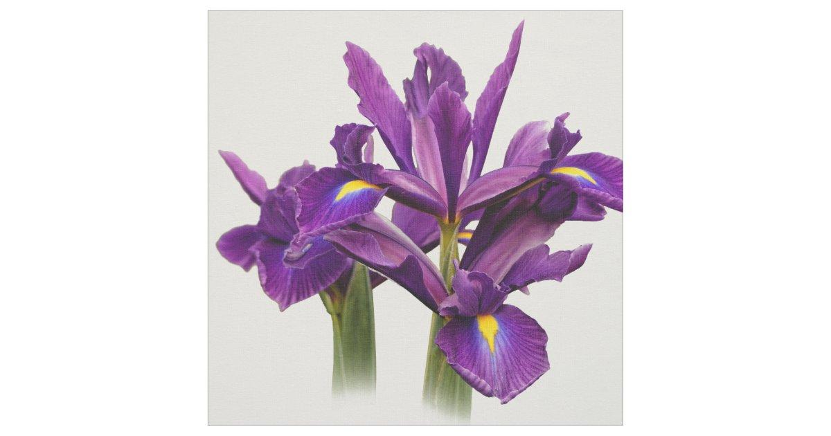 Elegant Dutch Iris Purple Sensation Fabric Zazzle Com