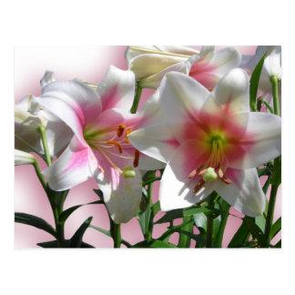 Elegant Flower Wedding Shower Peace Love Destiny Postcard