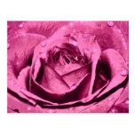 Elegant Girly Pink Rose Postcard