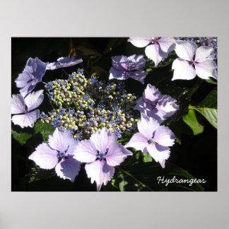 Elegant  Hydrangeas Print