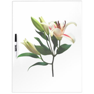 Elegant Lily and Buds Dry-Erase Board