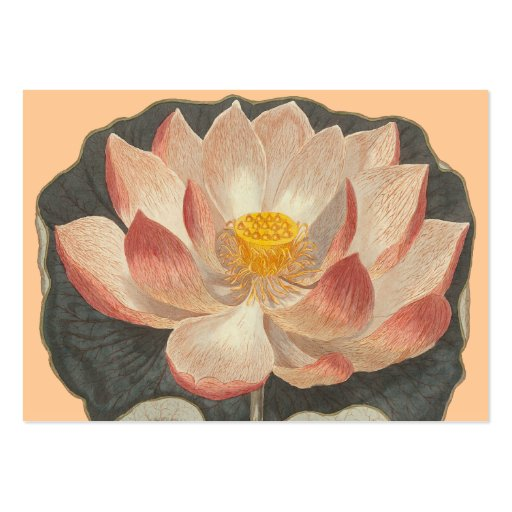 Elegant Lotus Blossom for Yoga / Buddhist Center Business Card Templates