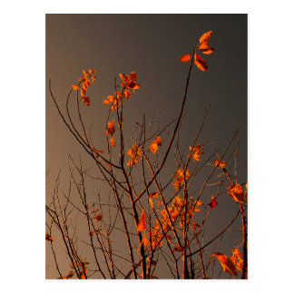 Elegant Modern Orange Leaves on Bush Postcard