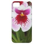 Elegant orchid iris graphic photo iPhone 5case iPhone 5 Cases