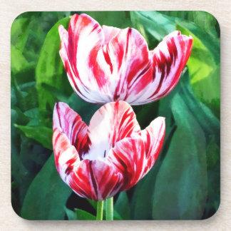 Elegant Pink And White Striped Tulips Beverage Coaster