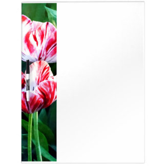 Elegant Pink And White Striped Tulips Dry-Erase Board