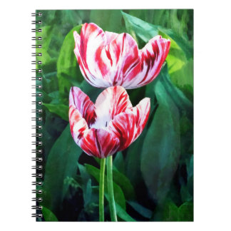 Elegant Pink And White Striped Tulips Spiral Notebook