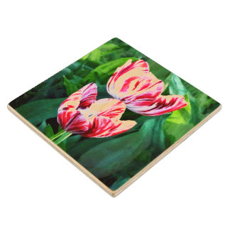 Elegant Pink And White Striped Tulips Wooden Coaster