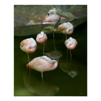 Elegant pink flamingos photography poster