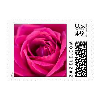 Elegant Pink Garden Rose Postage Stamp