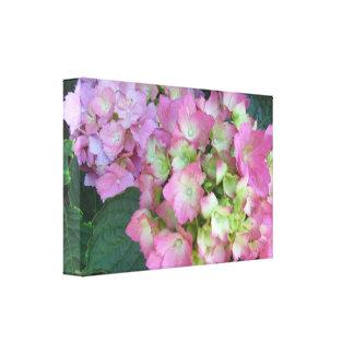 Elegant Pink Hydrangeas Stretched Canvas Prints