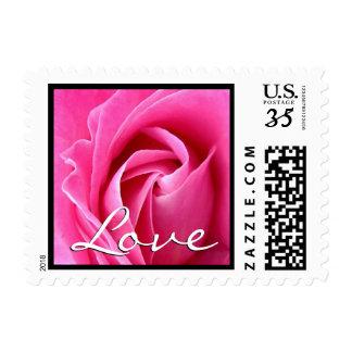 Elegant Pink Rose Love Wedding Black Trim Postage Stamp