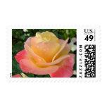 Elegant Pinkish - yellow rose with dew Postage