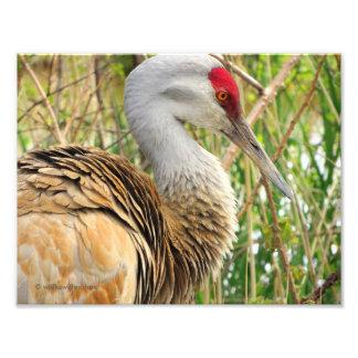 Elegant Profile of a Greater Sandhill Crane Photo Print