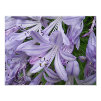 Elegant Purple Floral Poster