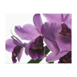 Elegant Purple Orchid 1 Canvas Print
