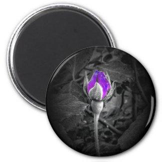 Elegant Purple Rosebud Color Splash Magnet