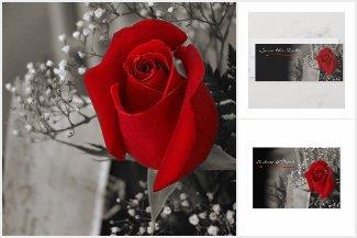 Elegant Red Rose Black and White Wedding