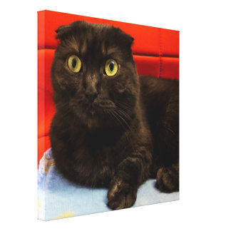 Elegant Relaxing Munchkin Cat Canvas Print