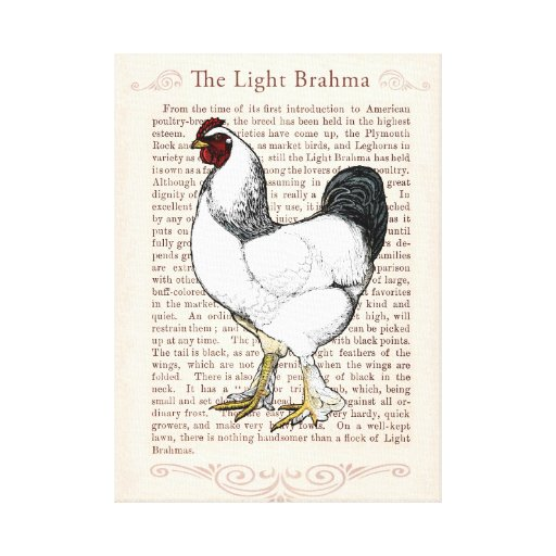 Elegant Rooster Country Style Living Kitchen Decor Stretched Canvas
