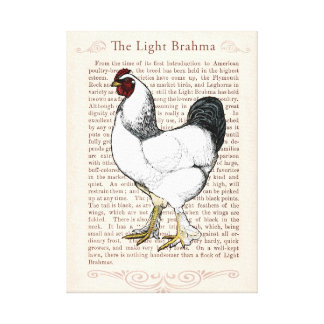 Elegant Rooster Country Style Living Kitchen Decor Canvas Print