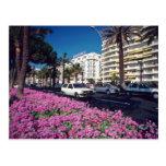 Elegant rosado Boulevard de Croisette, flor de Can Tarjeta Postal