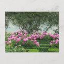 Elegant Roses Postcard