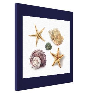 Elegant seashells shabby chic beach gallery wrap canvas