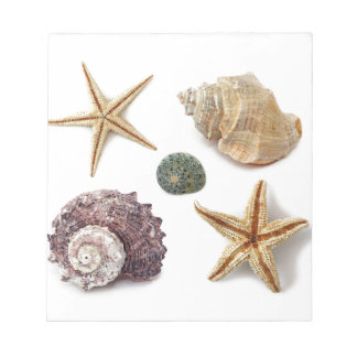 Elegant seashells shabby chic beach note pad