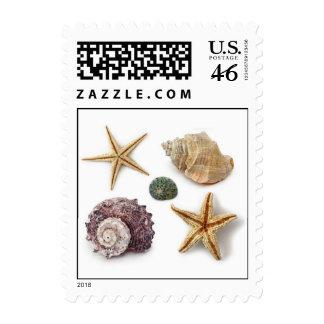 Elegant seashells shabby chic beach postage