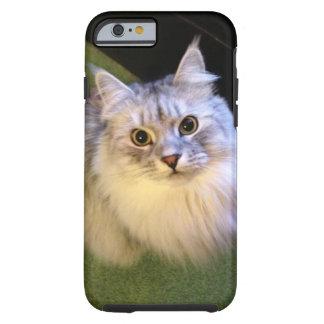 Elegant Siberian Cat iPhone 6 case